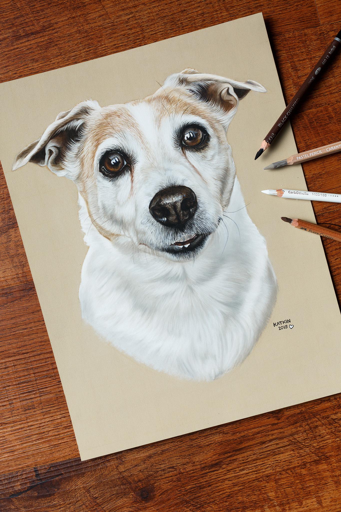 Jack Russell Terrier Bijou, 24x32 cm