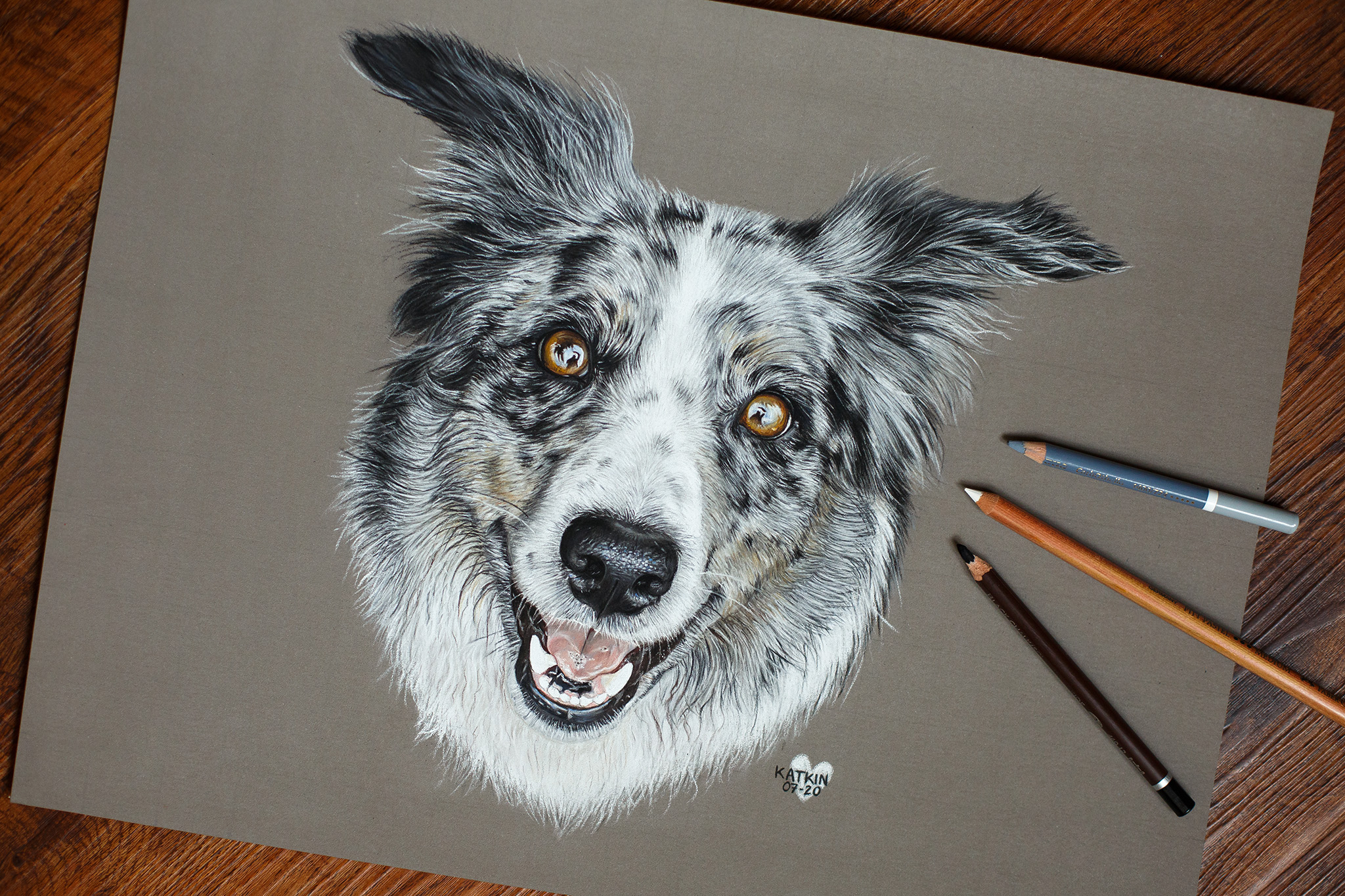 Black merle Border Collie Hündin Rumie, 30x40 cm