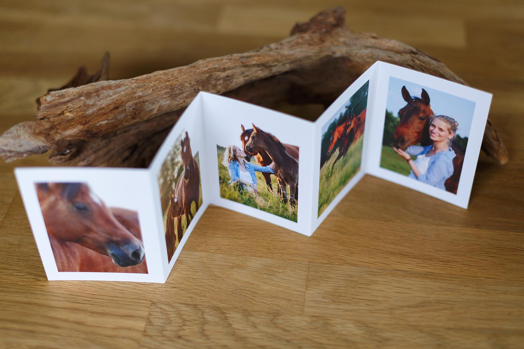 Leporello – Pferde