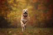 Tommy flitzt durch den Herbst