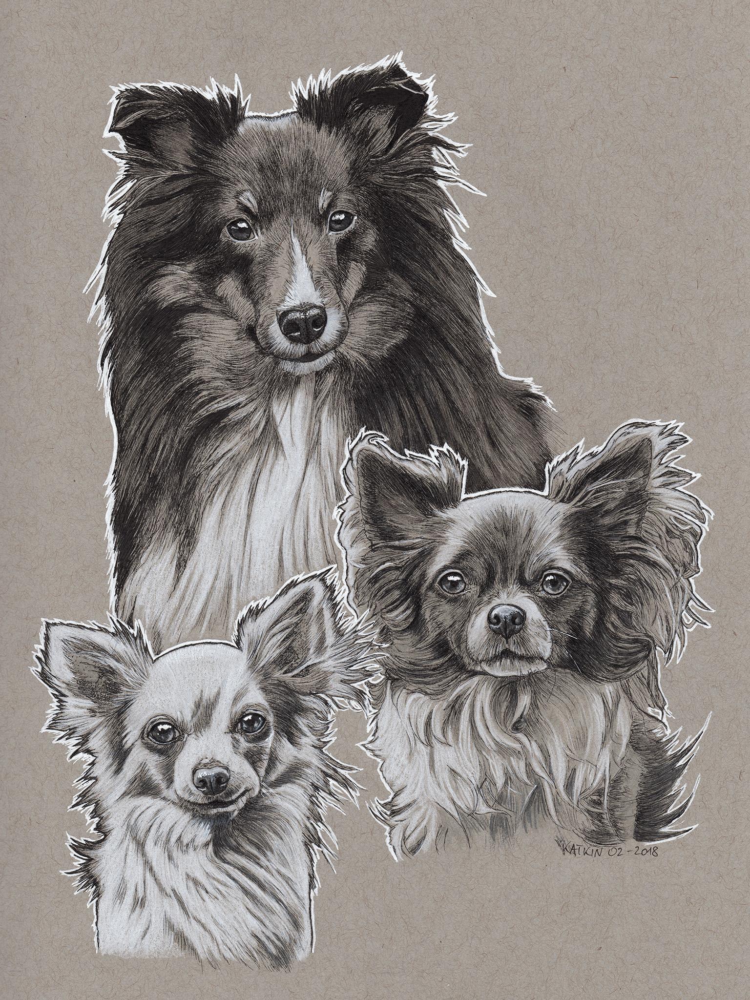 Ton in Ton Chihuahuas + Sheltie Finn, Peanut, Eevee